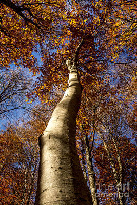 Photograph - Tree Trunk by Bernard Jaubert