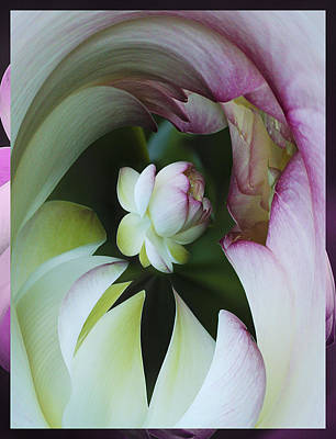 Tunnel Of Lotus Print by Jean Noren