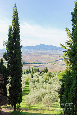 Nature Photograph - Tuscany Landscape With Cypress Trees Making A Frame. Italy. by Michal Bednarek
