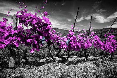 Vino Photograph - Tuscany Vineyard by Al Hurley