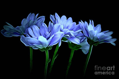Blue Flowers Photograph - Until The Morning by Krissy Katsimbras