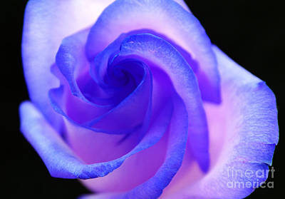 Purple Rose Photograph - Until We Meet Again by Krissy Katsimbras