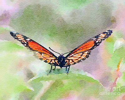 Watercolor Painting - Viceroy Butterfly  by Kerri Farley