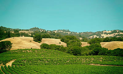 Vineyards Of Napa Valley Print by Mountain Dreams