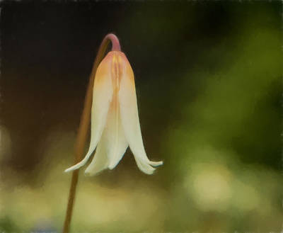 Photograph - Easter Lily - Watercolor Effect by Marilyn Wilson