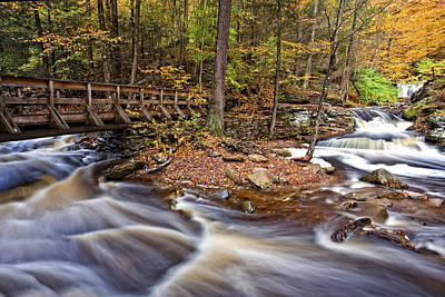 Leaf Photograph - Where The Waters Meet by Marcia Colelli
