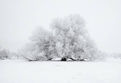 White On White Print by Mike Dawson