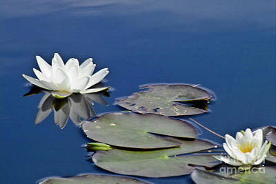 Water Lilly Photograph - White Water Lily by Heiko Koehrer-Wagner
