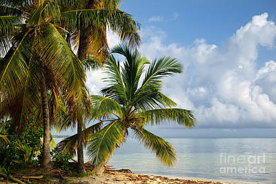 Photograph - Wild Beach Dominican Republic  by Eyzen Medina