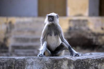 Rajasthan Photograph - wild monkey in Rajasthan - India by Joana Kruse