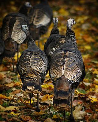 Wild Turkey Photograph - Wild Turkey by Scott Hovind
