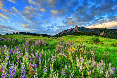Fort Collins Photograph - Wildflower Wonder by Scott Mahon