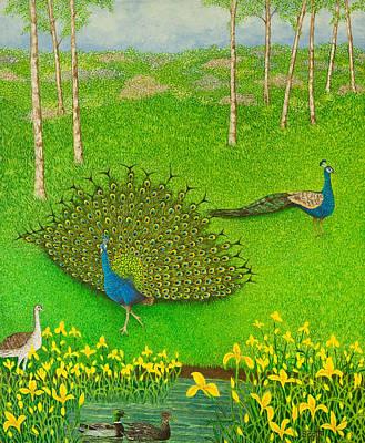 Peacock Painting - Winning Ways by Pat Scott
