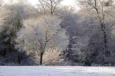 Winter Trees Photograph - Winter Light by Sophie De Roumanie