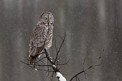 Winter Storm Photograph - Winterstill by Sandy Sisti