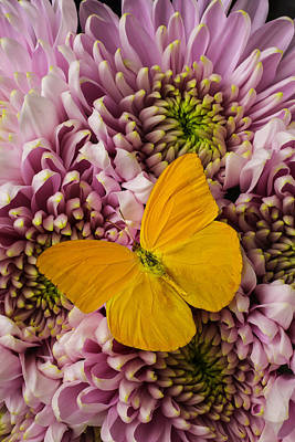 Yellow Butterfly Photograph - Yellow Butterfly Beauty by Garry Gay