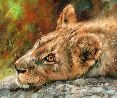 Lion Painting - Young Lion by David Stribbling