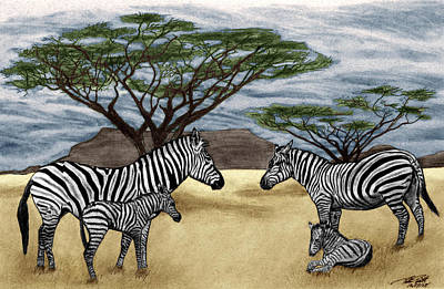 Zebra Drawing - Zebra African Outback  by Peter Piatt