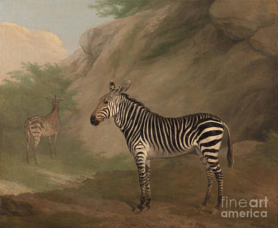 Jacques Painting - Zebra by Celestial Images