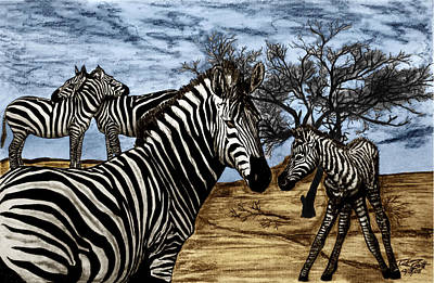 Charcoal Drawing - Zebra Outback  by Peter Piatt