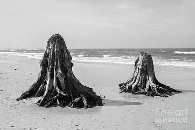 Storm Photograph - 3000 Years Old Tree Trunks On The Beach After Storm. Slowinski National Park, Baltic Sea, Poland by Michal Bednarek