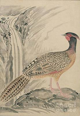 Yellow Beak Painting - Birds Of Japan In The 19th Century by Celestial Images