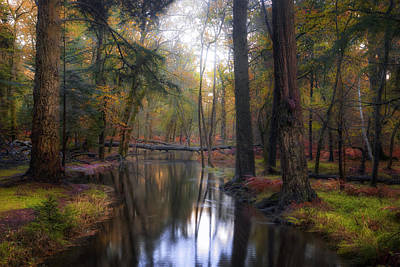 New Forest Photograph - New Forest - England by Joana Kruse