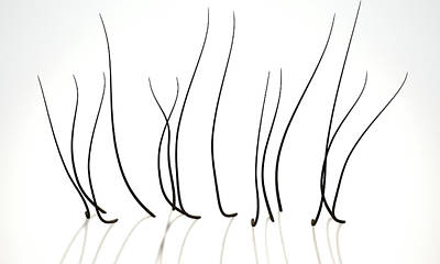 Microscopic Hair Fibers Print by Allan Swart
