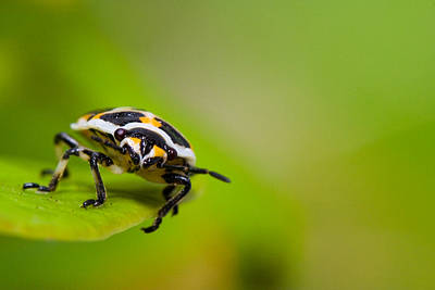 Colourfull Photograph - Bug by Andre Goncalves
