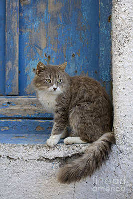 Gray Tabby Photograph - Cat In A Doorway, Greece by Jean-Louis Klein & Marie-Luce Hubert