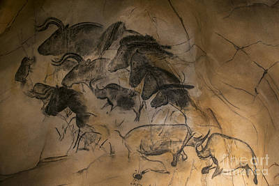 Chauvet Cave Photograph - 150501p084 by Arterra Picture Library