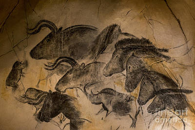 Chauvet Cave Photograph - 150501p085 by Arterra Picture Library