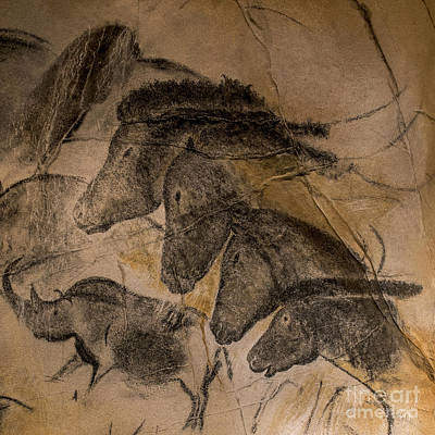 Chauvet Cave Photograph - 150501p087 by Arterra Picture Library