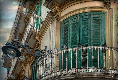 Fenster Photograph - 17 In One Fell Swoop by Hanny Heim