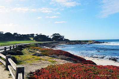 17 Mile Drive Shore Line Print by Barbara Snyder