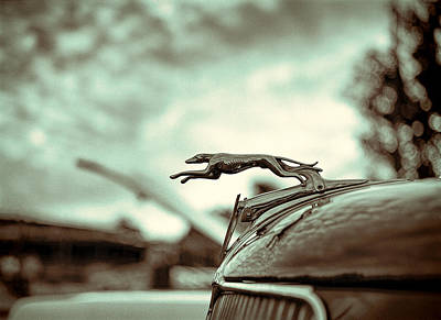 Greyhounds Photograph - 1934 Ford Hood Ornament by Jon Woodhams