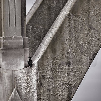 Cormorant Photograph - Architectural Detail by Carol Leigh