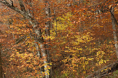Trees Photograph - Autumn In The Woods by Andrew Soundarajan