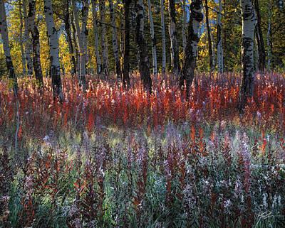 Autumn Light Print by Leland D Howard