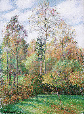 Impressionism Painting - Autumn, Poplars, Eragny by Camille Pissarro