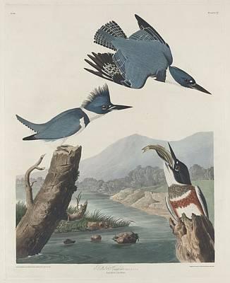 Kingfisher Drawing - Belted Kingfisher by John James Audubon