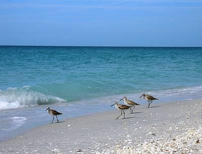 Birds On Beach Original by Geralyn Palmer