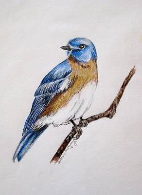Bluebird Drawing - Bluebird Guardian by Kathrine McMurray