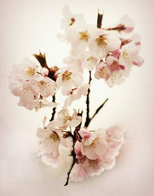 Pear Digital Art - Blush Blossom by Jessica Jenney