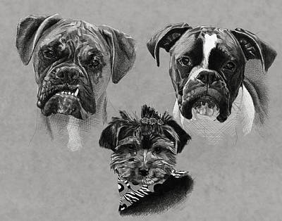 2 Boxers 1 Yorkie Print by Myke  Irving