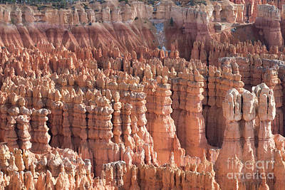 Bryce Canyon Print by Juli Scalzi
