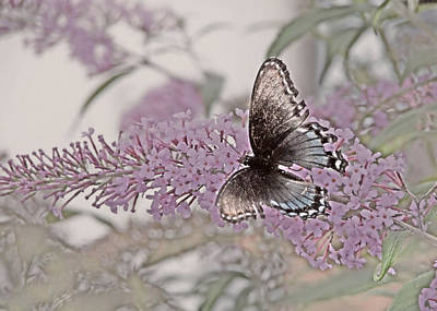 Butterfly Photograph - Butterfly Kisses by JAMART Photography