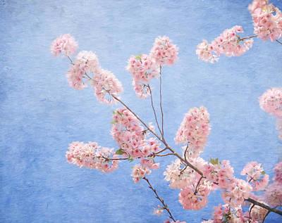 Cherry Blossoms Print by Kim Hojnacki