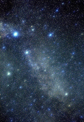Cygnus Constellation Print by John Sanford