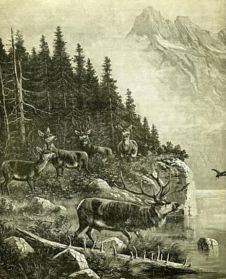 Deer Print by Austrian School